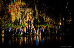 A Light in the Darkness of a Louisiana Swamp